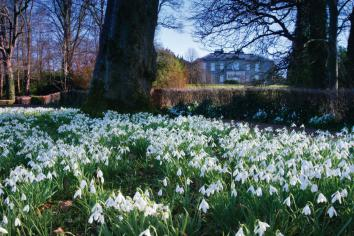 Good thymes ahead for green-fingered enthusiasts