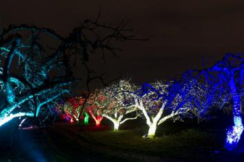 Illuminated orchard display to benefit Katie Rose's Journey